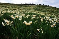 春の香り - 源爺の写真館