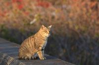 海辺の猫チャンズ♪ - happy-cafe*vol.2