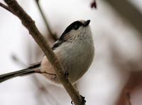 今日の鳥さん190112 - 万願寺通信