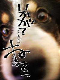 我が家の「きり」 - 山田南平Blog