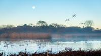 野鳥のいる沼、明け方の風景 - 猫と夕焼け