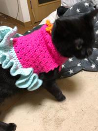 猫セーター新作 - 愛犬家の猫日記
