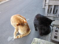 微妙な - 猫背の話し