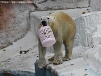 2018年12月天王寺動物園2その2マレーグマに冬至のかぼちゃプレゼント - ハープの徒然草