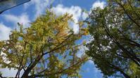 家族で御堂筋界隈を散策&買い物 - ハチドリのブラジル・サンパウロ(時々日本)日記