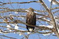 隣町のオジロ - 今日の鳥さんⅡ