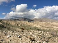 砂漠の花見が草むしりに変わる - お転婆シニアのガーデニング、旅、ロードバイク、たまの料理