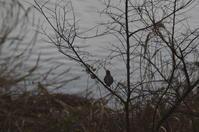 2019鳥撮り - (鳥撮)ハタ坊:PENTAX k-3、k-5で撮った写真を載せていきますので、ヨロシクですm(_ _)m