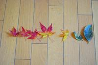 落ち葉とタラ - サバとタラ