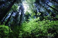 緑の大聖堂 - 拙者の写真修行小屋