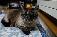 鏡餅ふうの猫たち - 夢風 御朱印日記