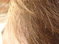 2.5倍 - Hair Produce TIARE