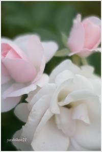 KAMAKURA - 花鳥風猫ワン