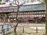 京都、冬の散策Ⅵ - ライブ インテリジェンス アカデミー(LIA)