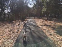 ダージモービルで砧公園へ - ミニチュアブルテリア ダージと一緒3