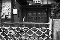 浅草散歩- 82 - Camellia-shige Gallery 2