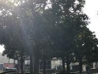 着物を着て365日❤️今日は松江市の成人式です。 - 奈良 京都 松江。 国際文化観光都市  松江市議会議員 貴谷麻以  きたにまい