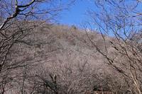 大山へ初詣登山 その2 - ぷんとの業務日報2ndGear