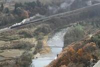 初冬の吊り橋と棚田- 2018年・上越線 - - ねこの撮った汽車