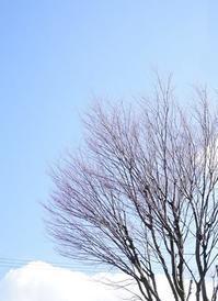 青空を見て背筋を伸ばす! - お花に囲まれて