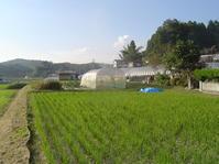 王地株式会社の考える田圃のデザインとは - 鯉の里は、米の郷