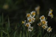 花島公園で鳥撮り - (鳥撮)ハタ坊:PENTAX k-3、k-5で撮った写真を載せていきますので、ヨロシクですm(_ _)m