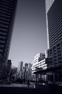 Tokyo Snap 32月島 - 花は桜木、