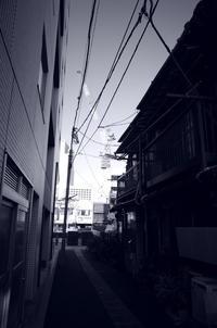 Tokyo Snap 33月島2 - 花は桜木、