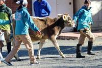 新春!動物パレード!!(埼玉県こども動物自然公園)その3~パレードの帰り道 - 続々・動物園ありマス。