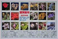 花の年賀状(良)1月7日作成 - 野山の花たち