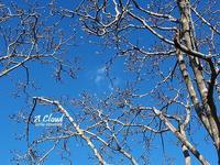 温かい日 - HAIKU/winter PHOTO