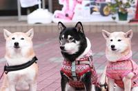 わんちゃん集合写真~かぼすちゃん1日花屋さん2019(5) - きょうだい猫と仲良し暮らし