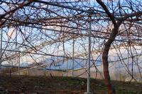 オーブ? - ~葡萄と田舎時間~ 西田葡萄園のブログ