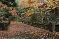 蓬莱山神社 紅葉 2 - photograph3