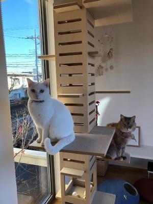 里親様便り - 保護猫さんのご縁探し