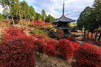 滋賀の紅葉2018湖南三山の秋・常楽寺 - 花景色-K.W.C. PhotoBlog