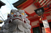 尼崎市内六十六社  七松 八幡神社 狛犬 (吽形) - 狛犬の尻尾
