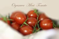 購入できないミニトマト - 困難の中にこそ美がある