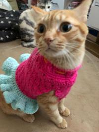 プリンセス栗ちゃん - 愛犬家の猫日記