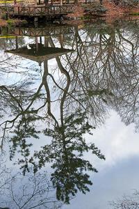 なんちゃって鳥屋さん@府立植物園其の二 - デジタルな鍛冶屋の写真歩記