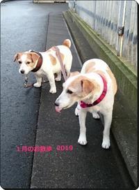 1月のお散歩 - フラワースタジオクレール