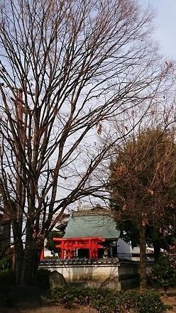 馬冷池公園にて2019・1・16 -