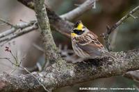 筑波山山頂にて - 気ままに野鳥観察