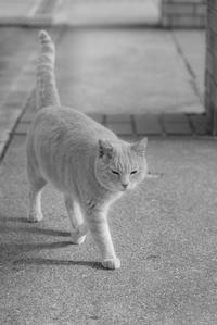 吾輩は猫である 4 - 気ままにお散歩