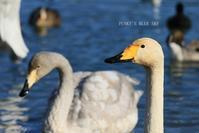 水辺の鳥たち・Ⅱ - FUNKY'S BLUE SKY
