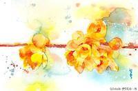 蝋梅の花 - towel-N手帖