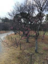 大濠公園に梅が咲き始めていました♪ - 高野山ムササビ戦法 & 袖飛車 & 石田流