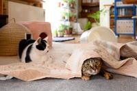 ホカぺ、カバーの下 - 猫と夕焼け