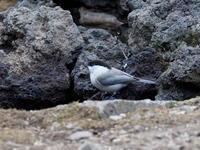 コガラも出てくれた森林公園の水場 - コーヒー党の野鳥と自然 パート2