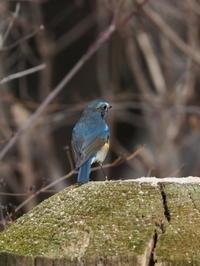 ルリビタキに出会えた小根山森林公園 - コーヒー党の野鳥と自然 パート2